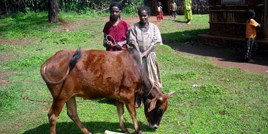 Ahmarich und Zaritu mit ihrer Kuh in Äthiopien (Foto: Oxfam)