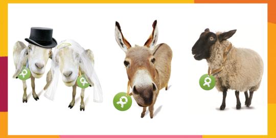 Ziegenpaar, Esel und Schaf für Brands4Friends
