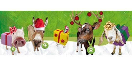 Wer wird dein Weihnachtsstar?