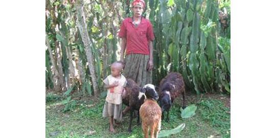 Shure mit ihren Schafen in Äthiopien